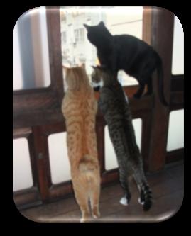 クリスタルハウス猫